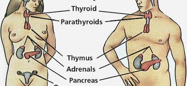 Disturbi ormonali e genitali