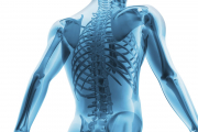 Disturbi osteo-articolari